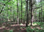54 acres Timberland near Lincoln Mountain State Forest