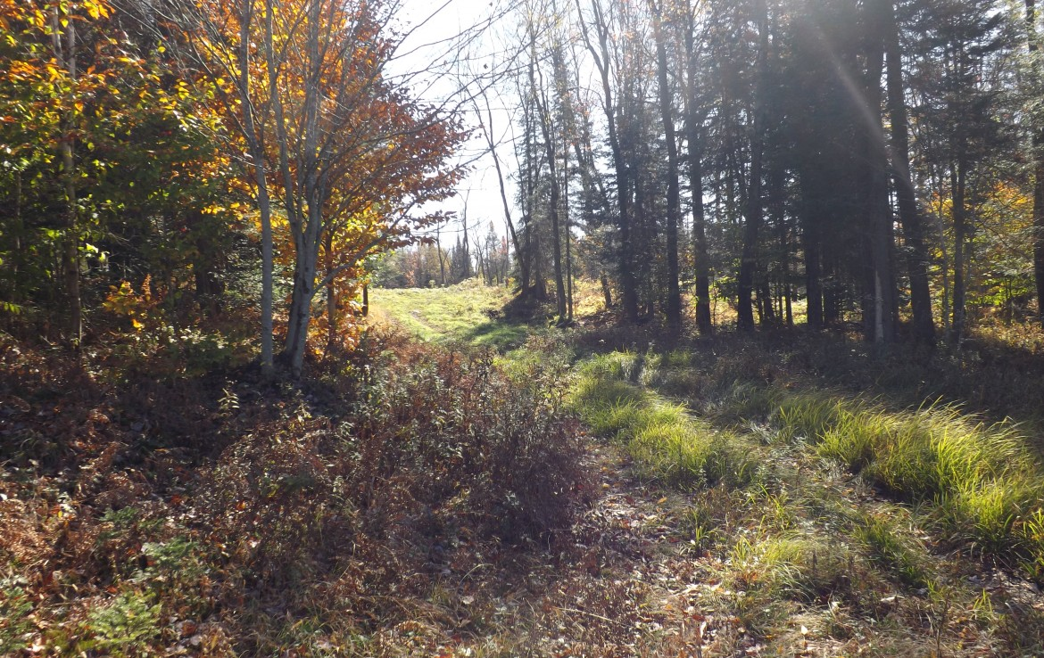 North Country Woodlands for sale Forestport NY