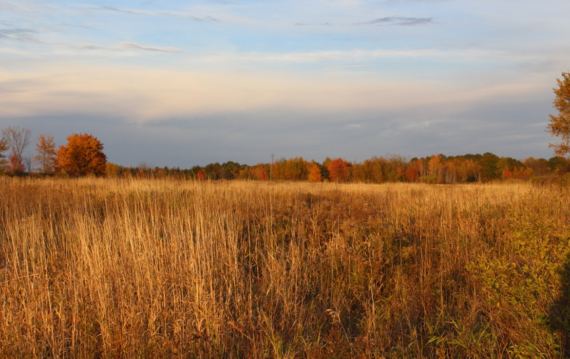 36 acres Hunting Land for sale Cape Vincent NY