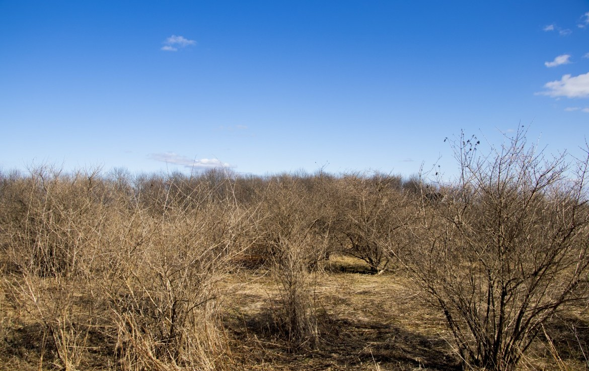 5 acres hunting land for sale bordering Beaver Meadow State Forest!