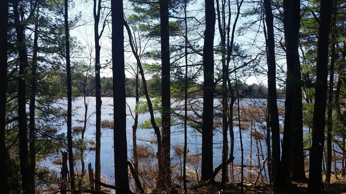 Acreage on quiet north country fishery Carterville Pond!