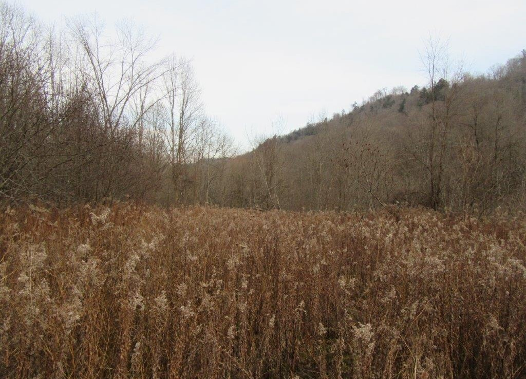 11 acres land for sale on the Lansing Kill in Boonville, NY