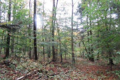 Woodlands for sale near Mad River State Forest