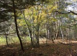 Elevated Woodlands near Owl Pond for sale