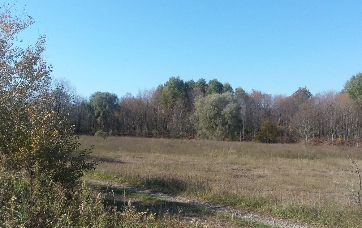 312 acres Hunting Land for Sale
