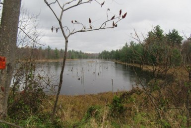 Pond on hunting land for sale ny near Trout Lake