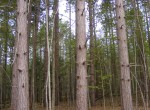 land for sale bordering Buckton State Forest
