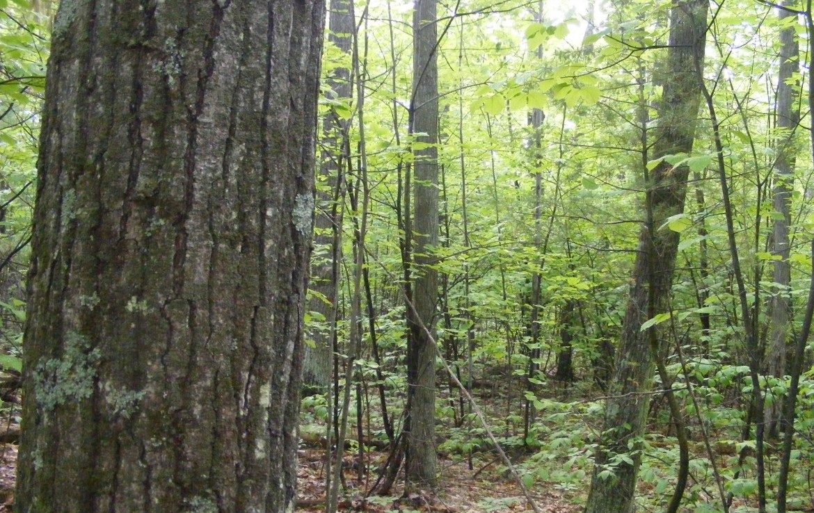 725 acres Adirondack Timberland for sale in Ausable, NY!