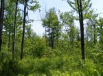 366 acres Hunting Land for sale bordering Dunkin's Reserve State Forest NY!