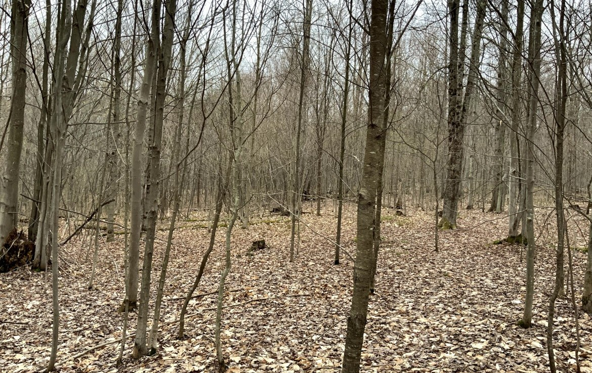 Chenango County, NY Trophy Hunting bordering Balsam Swamp State Forest!