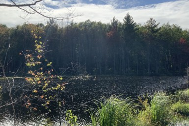 65 acres Land with Pond Williamstown NY
