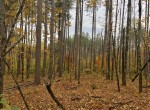 10 acre Country Building Lot Russell NY