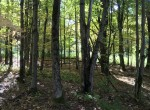 187 acres Hunting Land and Cozy Cabin for sale in St. Lawrence County, NY!