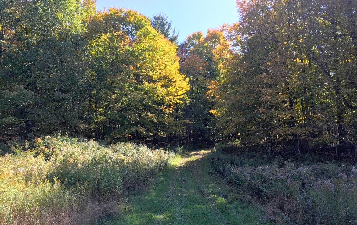 860 acre Glenmeal state forest is just down the road.