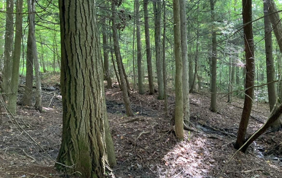 Southern Tier Hunting Land in Nelson, NY!