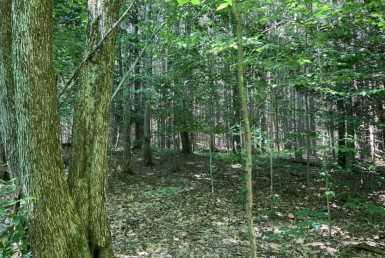 6 acres Hunting Camp Site Pharsalia NY