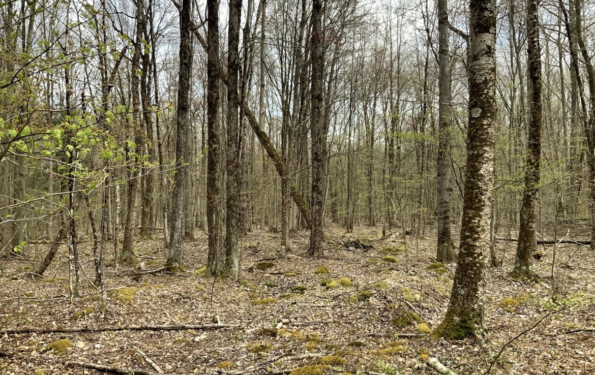71 acres Hunting Land for sale near Oneida Lake!