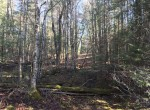 57 acres Land for Sale Bordering State Forest, Diana, NY!