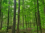 25 acre Forest Land Pulaski NY