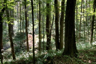 19.5 acres NY Northern Zone Hunting Land Florence NY