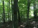 Private Wooded Building Site With River view and Power!