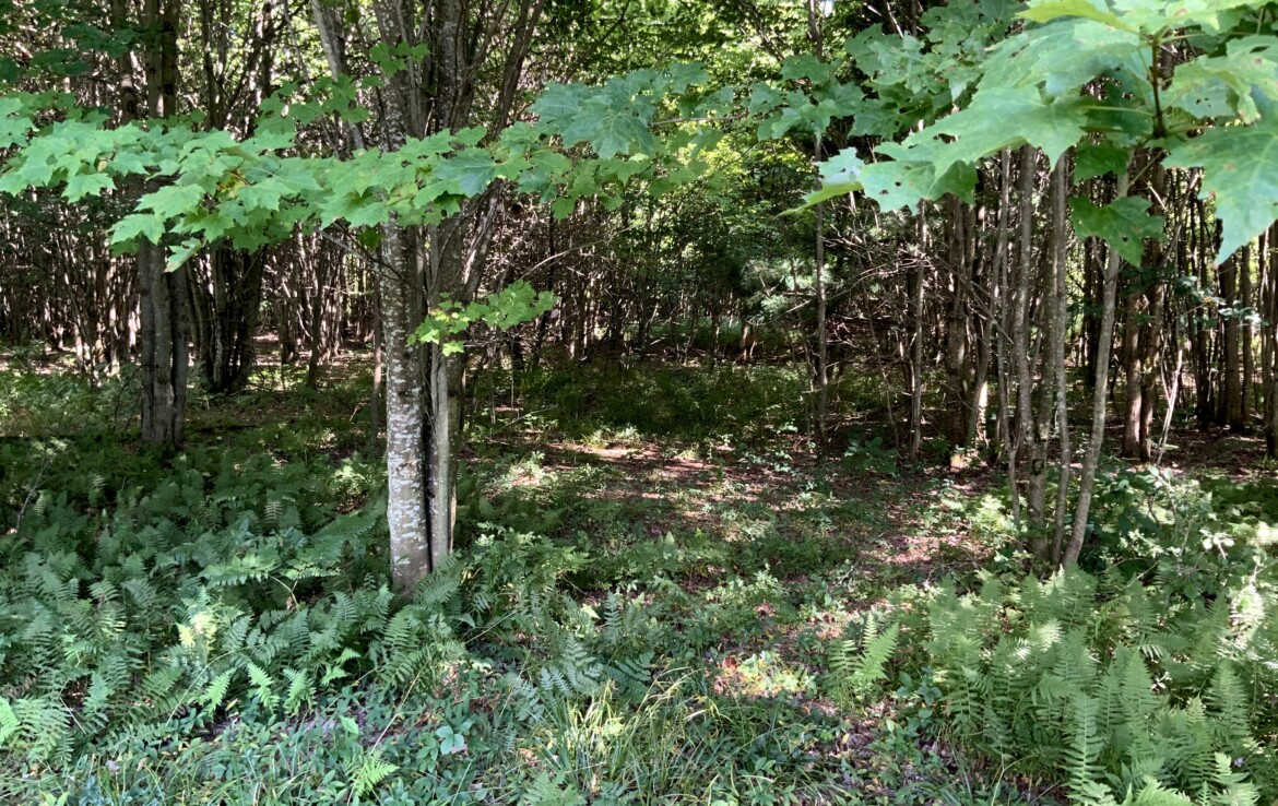 Close to Fish Creek Reservoir, State Land, and Snowmobile Trails!