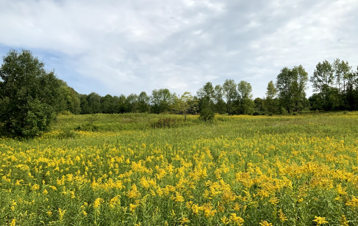 177 acres Prime Country Living and Hunting Land Columbus NY